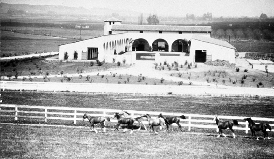 Horses running past stables