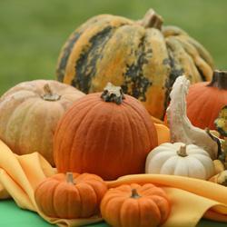 Pumpkin Patch Opens!