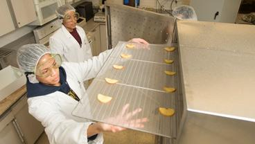 A student places a rack inside a food dehydrator in the food science lab.