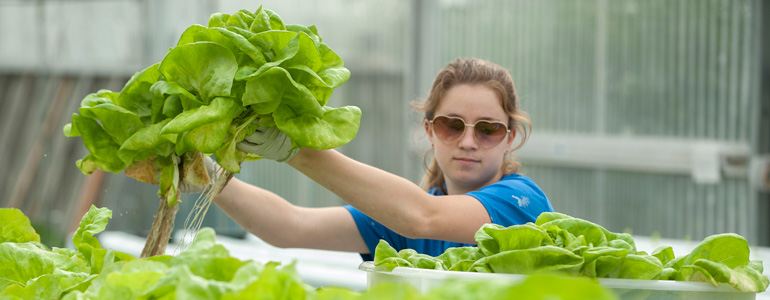 Plant Science students gain valuable work experience in our on-campus greenhouses, farm, and vineyards.