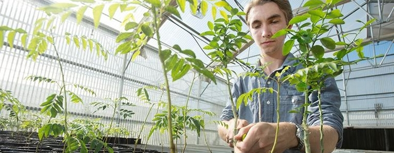 Plant Science students gain valuable work experience in our on-campus green houses.