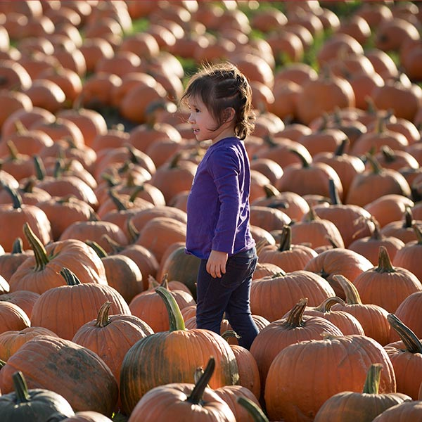 Toddler stands in the Pumpkin Patch