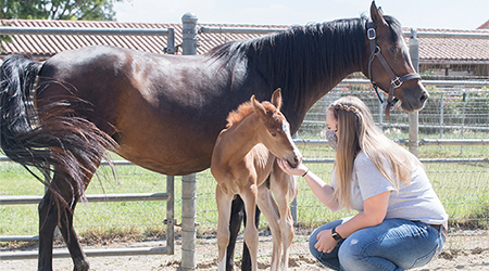 Natalie Moreno with horses at the W.K. Kellogg Arabian Horse Center