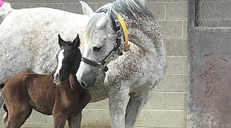 Foal Dillon and his mother