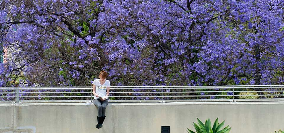 Student sitting in front of jacaranda tree