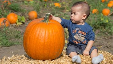 Baby with pumpkin at the 2015 Pumpkin Festival