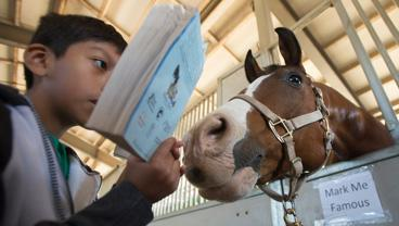 Mark Me Famous tries to get a closer look at the book, The Black Stallion, as 4th graders from Kellogg Elementary School read to horses.